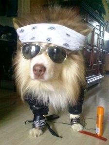 dog do rock